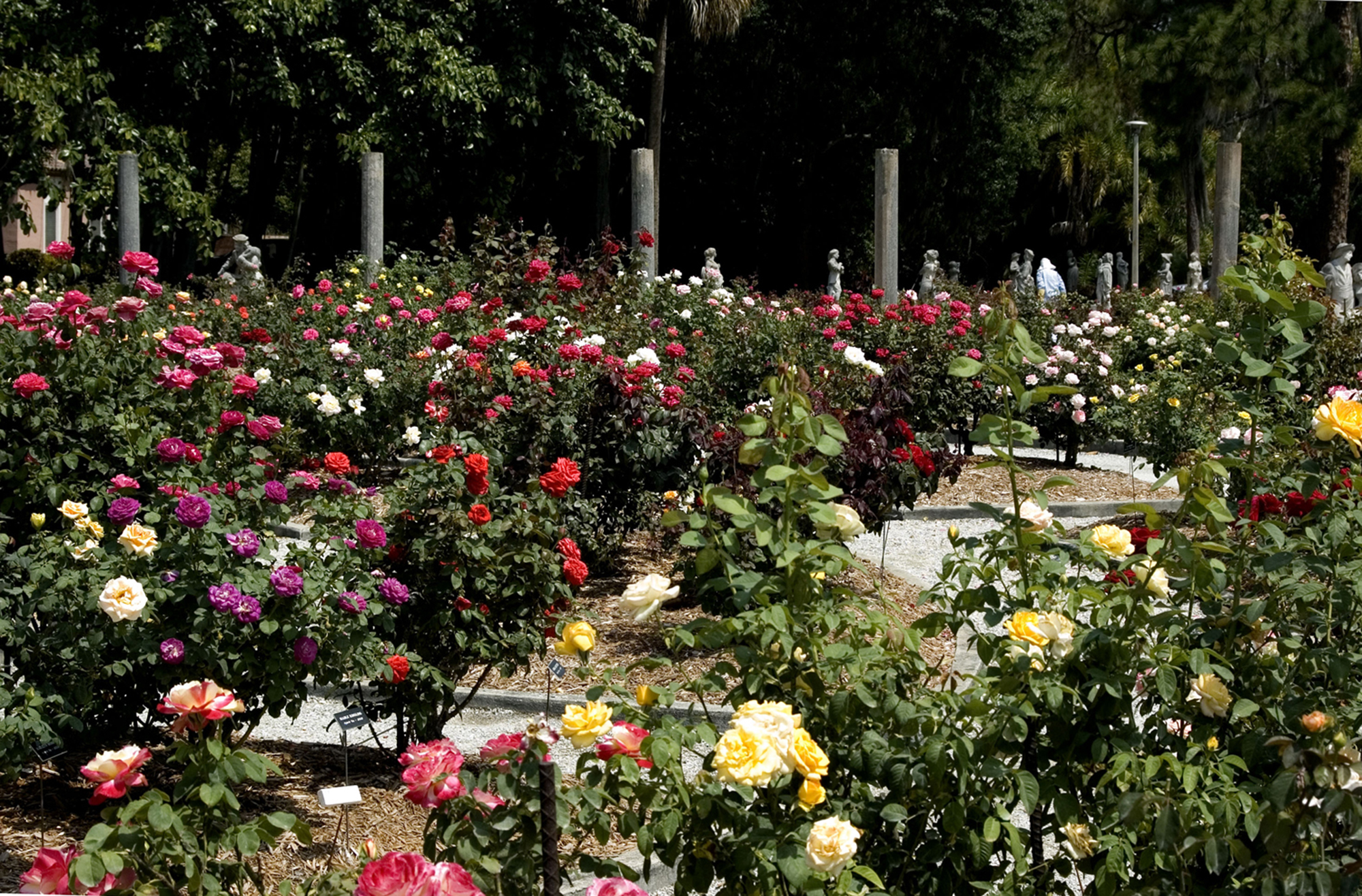 Mable Ringling 39 S Rose Garden The Ringling