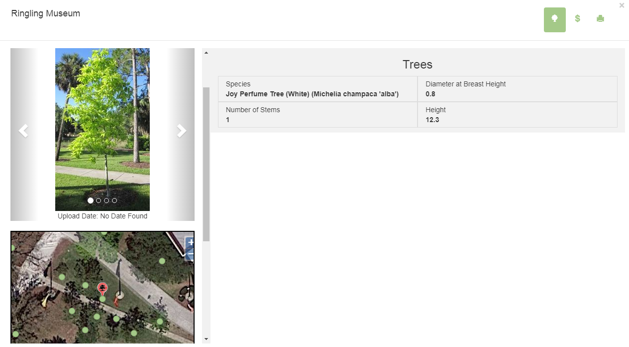 Entry for Joy Perfume Tree in TreeKeeper Software at The Ringling