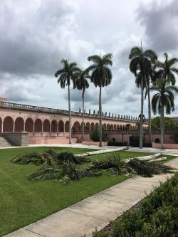 Cuban Royal Palms are Removed at The Ringling